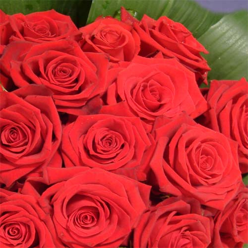 mothers-day-red-roses