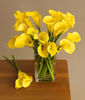 calla lily - yellow