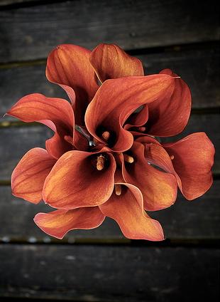 calla-lily-wedding-bouquets-pics
