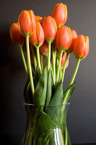 tulips-in-vase1