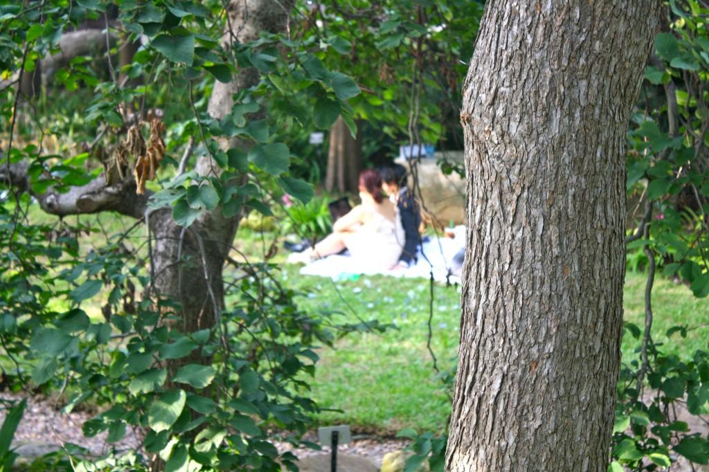 Dallas Marriage Proposal At Dallas Arboretum Gardens By