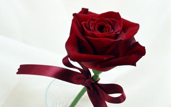 ws_Fancy_Rose_1440x900